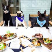 Dog at The Wilson, Dog menu
